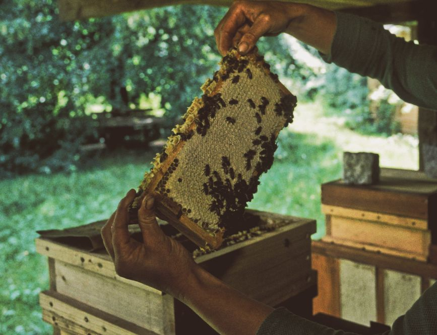 Each individual is part of a whole like here: Hundrets of bees keep their deehive alive.