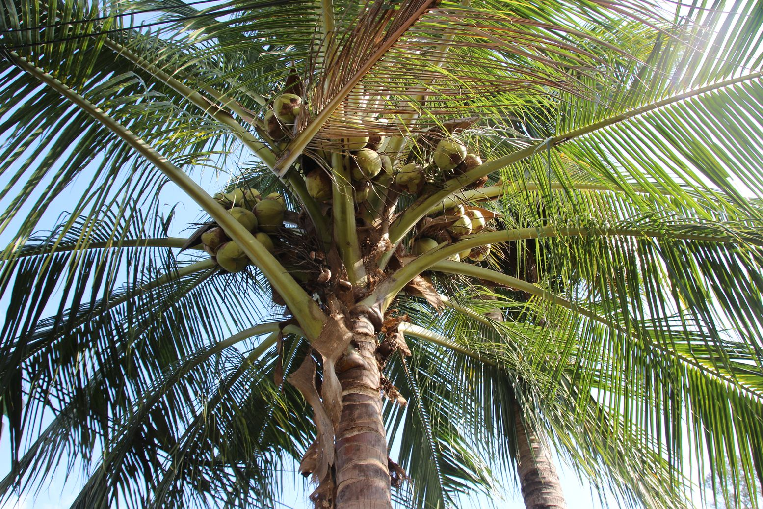 consider us to find a transparent partner for sourcing coconut fatty acids with a traceable supply chain