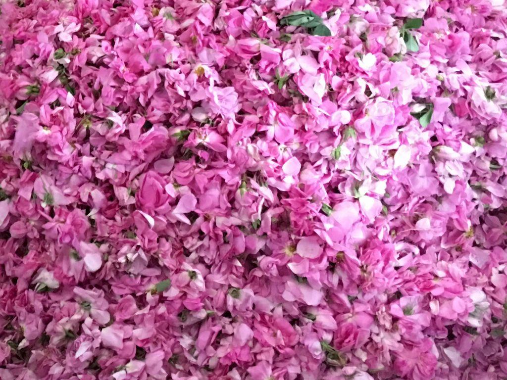 we offer rose oil, organic (analogcert.) from Afghanistan
