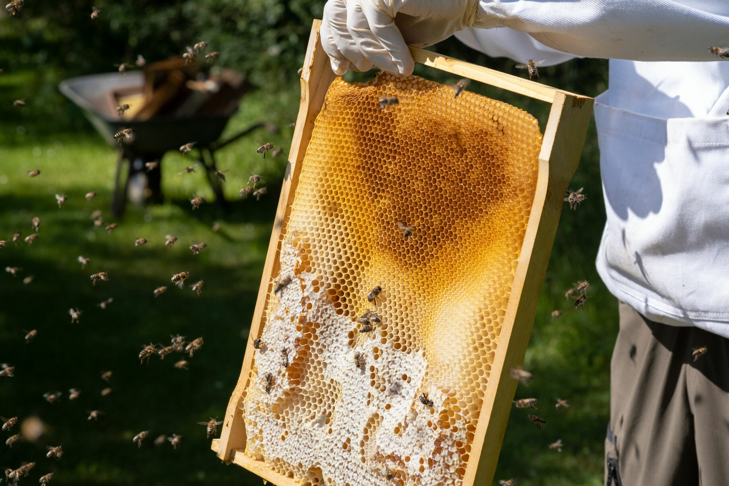 bees wax from German and Austrian organi apiculture safeguars another source of income for organic beekeepers
